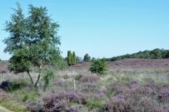 1_Landschap-13