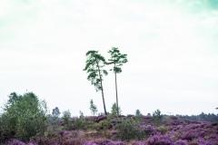 mooie-Heide-4.3