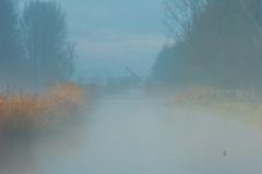Misty-morning-1