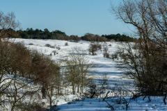 Winter-7